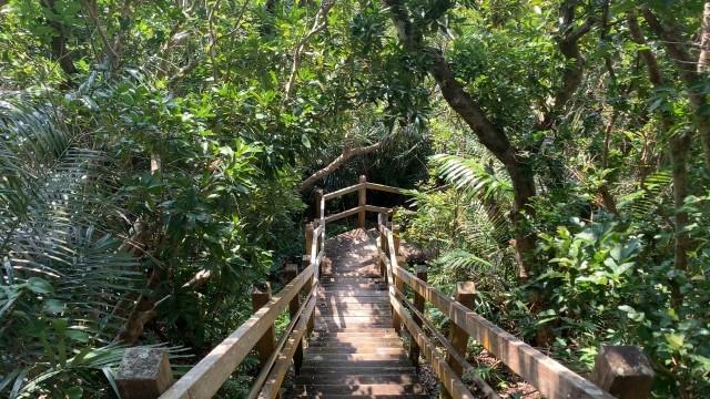 大神島の自然
